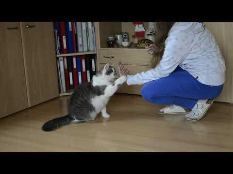Kiša - cat tricks February 2018