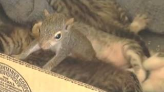 Mother cat adopts baby squirrel and teaches it to purr
