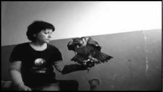 Да нахраниш ястребов орел