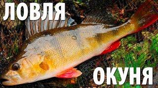 Рыбалка на озере в Карелии, видео ловли окуня на блесну