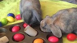 rabbit entertainment