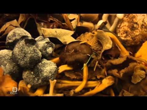 VII Jornadas Micológicas del Restaurante Antique (5-11-2015)