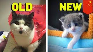 China just CLONED a cat! - TomoNews