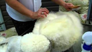 Arreau Standard Poodles  Line Brushing A Poodle Coat