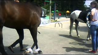 Свадьба лошадей