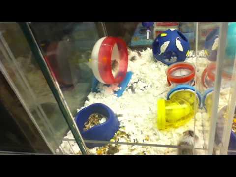 Hamsters get nuts