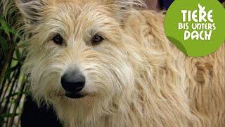 Best of Film-Hund Brezel | Tiere bis unters Dach | SWR Kindernetz