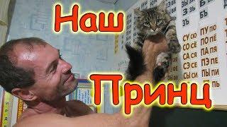У нас новый котенок в семье! Знакомьтесь - Принц! (08.17г.) Семья Бровченко.