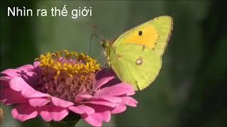 Animals love flowers, حيوانات تحب الزهور, animais amam flores, जानवरों को फूल पसंद हैं, 動物は花が大好き
