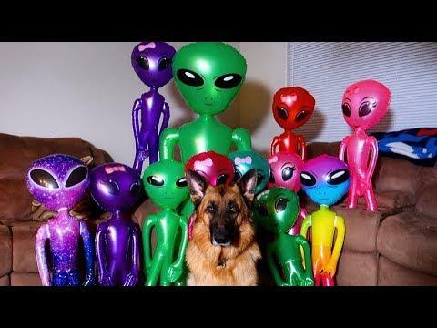 Dog Unmoved By Invasion Prank: Funny Dog Sniper Vs Aliens