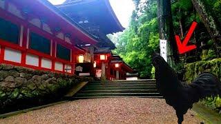 早朝のまだ人のいない神社を参拝する。 日本各地でエネルギーの高い神社...