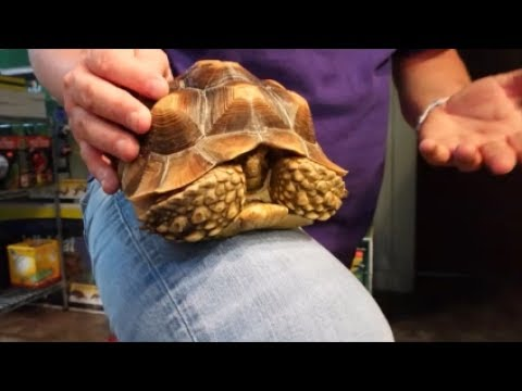 Tour of our shop!  The MANHATTAN REPTILE WORLD!!