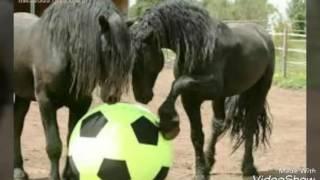Śmieszne konie w akcji!!!!