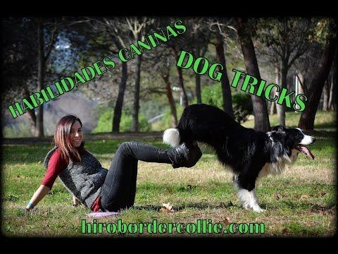 Dog tricks || Habilidades caninas