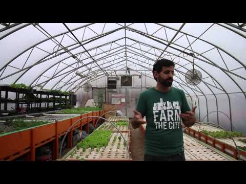 Exploring Toronto's urban agriculture movement with Fresh City Farms