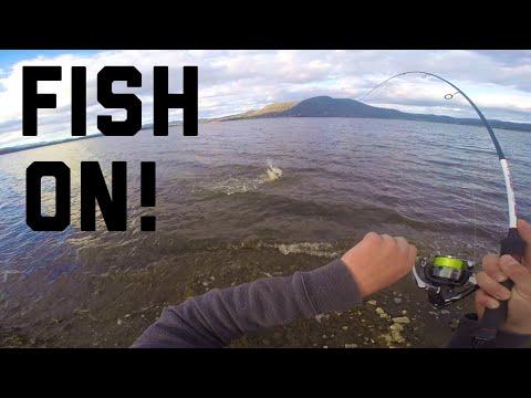 Personal Best Sea Run Trout!    Fishing Tasmania 2019: River Derwent