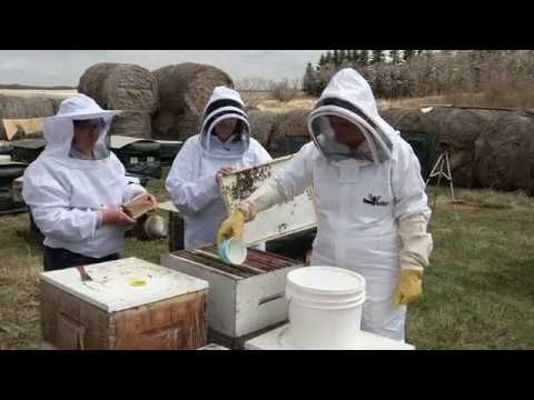 Applying Oxytetracycline to Prevent American Foulbrood Disease