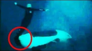 Insanely Weird Facts About Whales