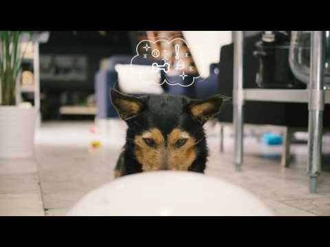 CleverPet | Exercise your pet's mind + body