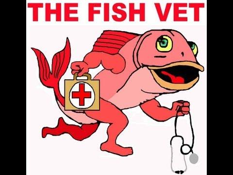 Fish Welfare Presentation