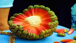 Top 5 Strangest Fruits in The World