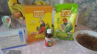 Питание во время линьки вашего попугайчика