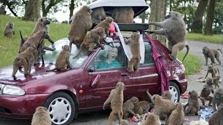 monkey funny [Best animal documentaries