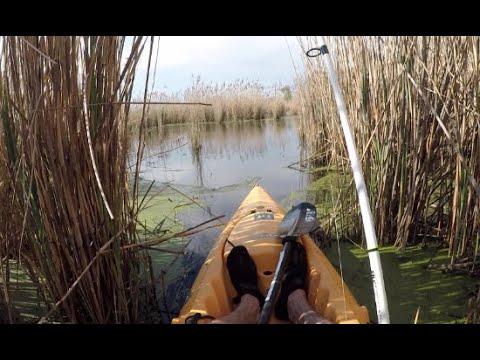 Swamp Fishing For INVASIVE AND PREHISTORIC FISH