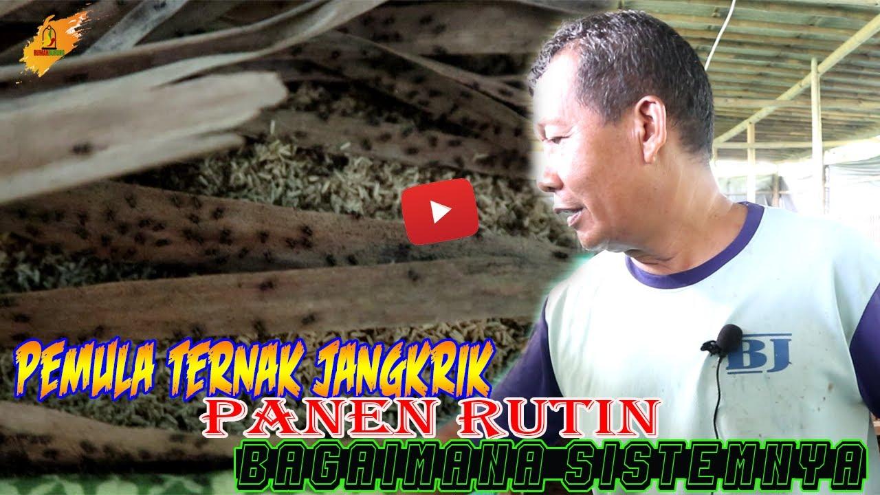 Rawat Sogon Sogok Ontong Dari Bulu Jarum Youtube