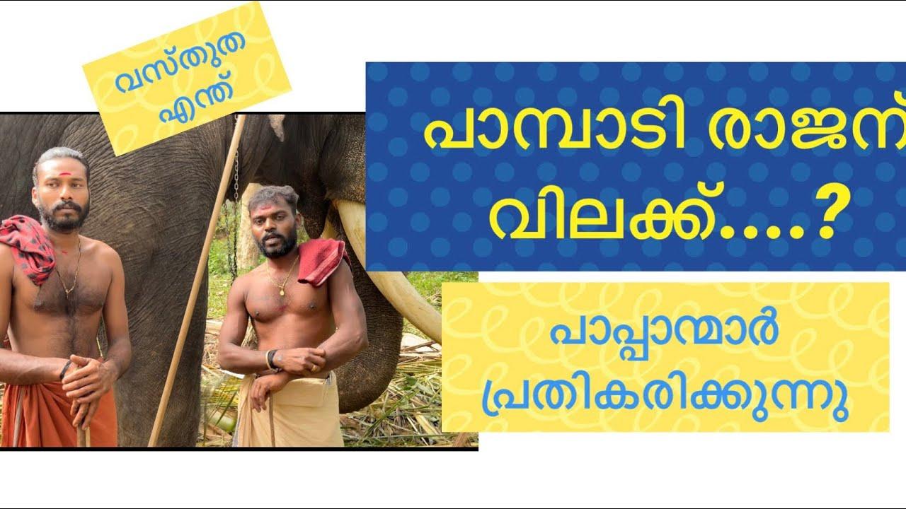 Pampady Rajan വിലക്ക് ? യാഥാർത്ഥ്യം എന്ത്പാപ്പാന്മാർ പ്രതികരിക്കുന്നു#pampadyrajan#keralaelephant#