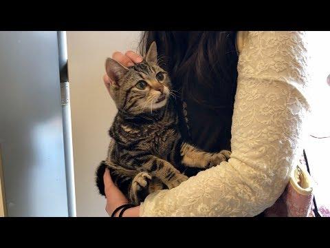 妹の帰宅が嬉しすぎて玄関までお迎えに来てしまった猫w