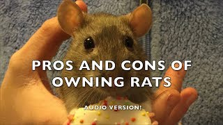 Pros and Cons of Fancy Rats as Pets  Audio version
