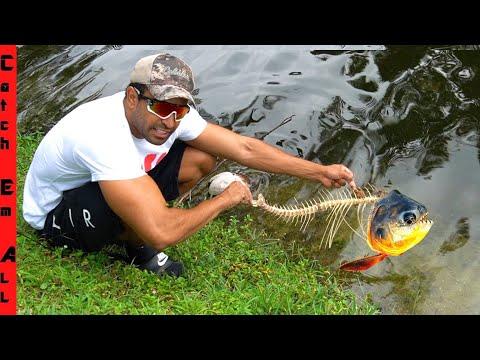 ZOMBIE FISH Still ALIVE! **Pacu Piranha**