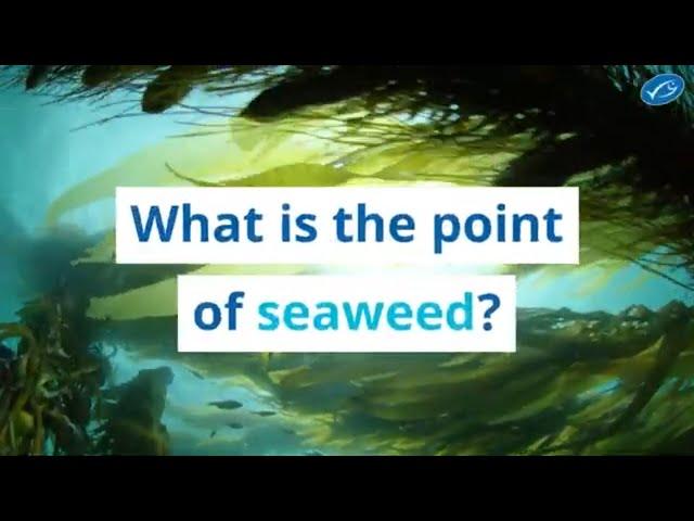 Seaweed market to hit $9.4 billion