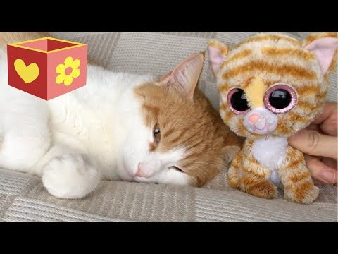 Cute cat part four | Bellboxes | Workout with Simba | 4 |