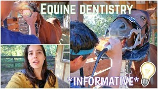 Filly's First Time Getting Her Teeth Floated   Barn Vlog