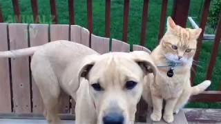 Кошки против собак / CATS vs DOGS  Compilation