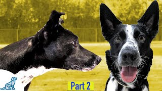 How To Teach Your Dog To Ignore Other Dogs - Professional Dog Training Tips