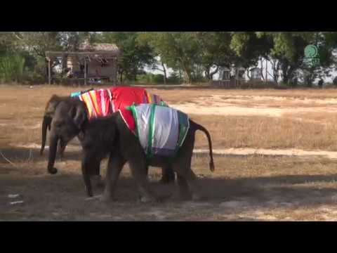 Orphaned Baby Elephant in Myanmar blanketed against cold