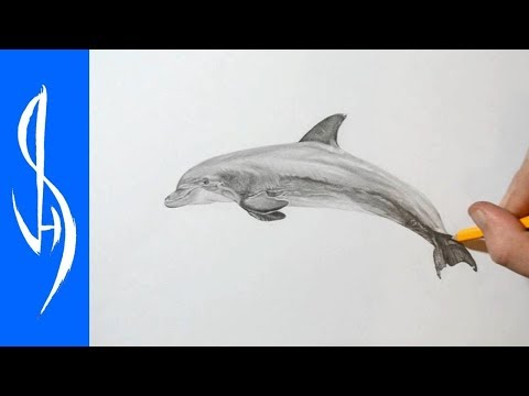 How to Draw a Dolphin with Graphite Pencil