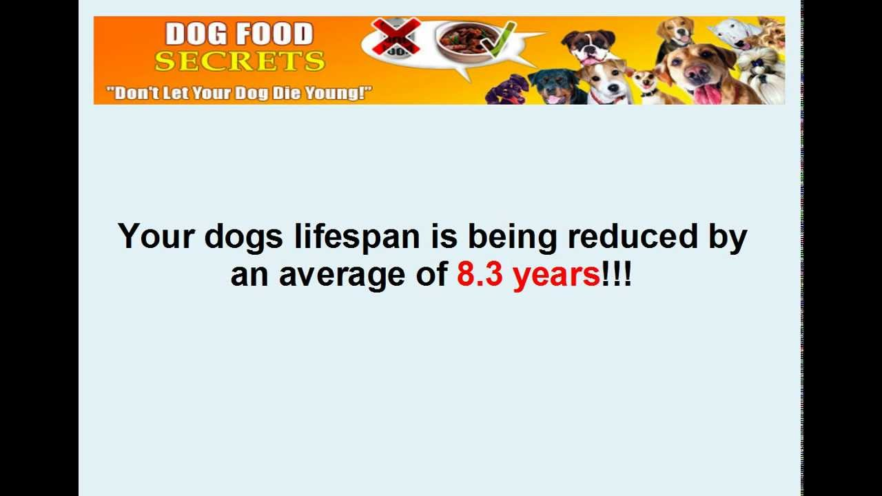 Homemade dog food recipes for dogs with kidney disease youtube forumfinder Gallery