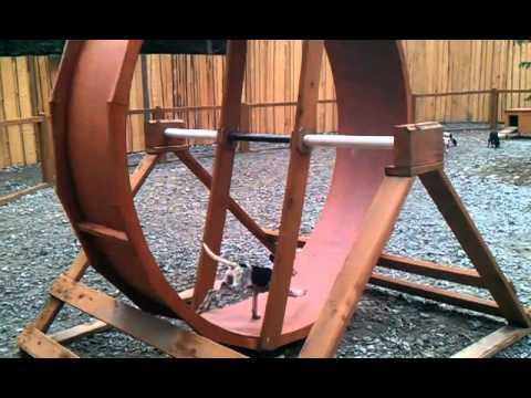 Sled dog puppy wheel
