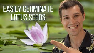 how to plant a lotus seed