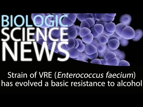 Science News - Strain Of VRE (Enterococcus Faecium) Has Evolved A Basic Resistance To Alcohol