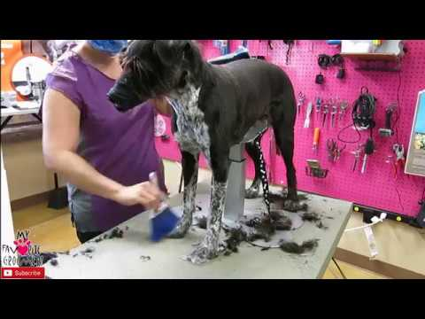 How to groom a mixed breed dog Pitbull Schnauzer Whippet