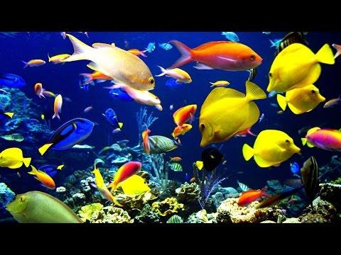 🐠 Красивые рыбки в аквариуме