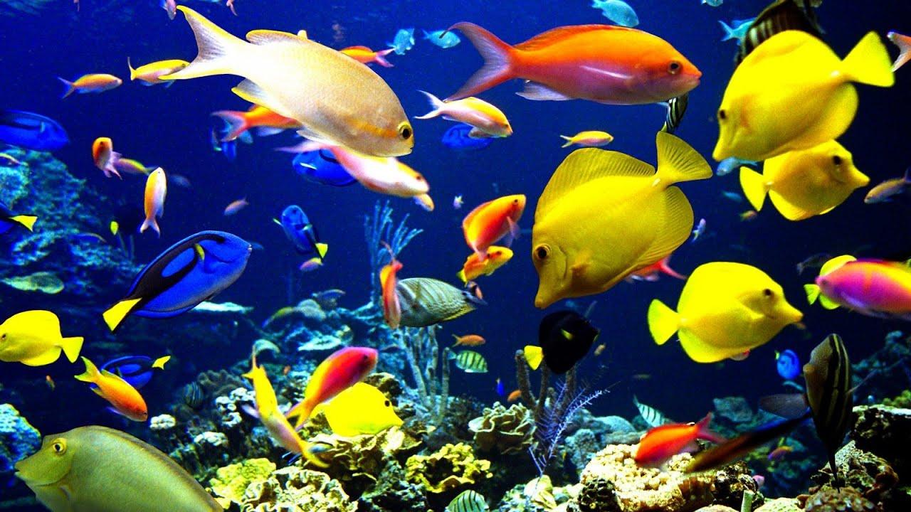 аквариум с рыбками картинки