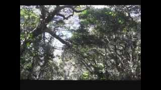 横須賀市浦賀の東叶神社の山頂にある勝海舟の祈願、断食、水垢離修練の...