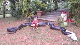 Giant Anaconda Captured After Eating Neighbour