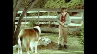 .Lassie.Sauve.Une.Vie.(fr) - 1